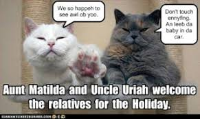 true book addict cat thursday happy thanksgiving and remembering