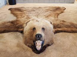 bear skin rug pictures images and stock photos istock
