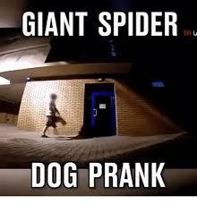 Huge Spider Memes Image Memes - 25 best memes about giant spider giant spider memes