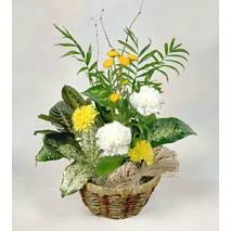 mothers day plants send s day plants to philippines delivery s day plants