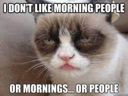 Meme Grumpy Cat - top 10 funniest summer grumpy cat memes into the wild screen printing