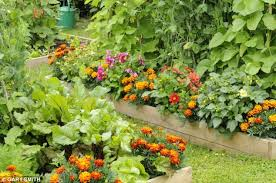 blend flowers and vegetables for a plot that looks as good as it