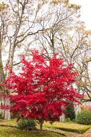 13 best zen garden images on pinterest zen gardens japanese