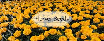 best gardening store buy rose u0026 organic seeds online from india
