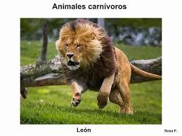 Imagenes De Animales Carnivoros Para Imprimir | maestra de primaria animales carnívoros vocabulario en imágenes