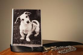 coping with loss of pet mourning the loss of your dog