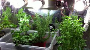 indoor garden tips growing herbs indoors in containers with grow