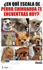 Memes De Chihuahua - cen que escala de perro chihuahua te encuentras hoy werever a ver