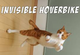 Invisible Cat Memes - invisible cat meme uploaded by yanito freminoshi