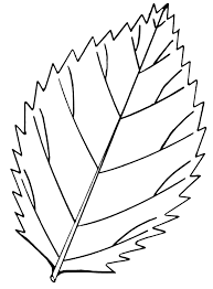 file serrated leaf psf png wikimedia commons