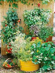 Ideas For Container Gardens - fresh ideas for growing vegetables in containers gardens