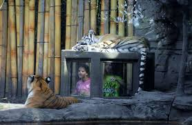busch gardens family vacation packages 5 animal encounters at busch gardens tampa