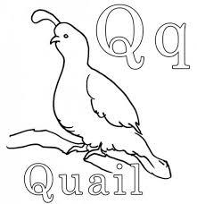Quail For Letter Q Coloring Page Bulk Color Coloring Pages Q