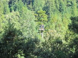 Sonoma Canopy by Extreme Bay Area Adventures That Anyone Can Do