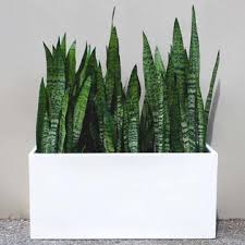 root and stock brls361416 wht belmont rectangle planter box