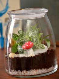 jar terrarium only for bangalore delivery greenmylife anyone