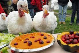 upstate ny s farm sanctuary celebrates thanksgiving early by