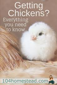 Raising Meat Chickens Your Backyard by 632 Best Backyard Chickens U0026 Ducks Images On Pinterest Raising