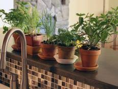 How To Arrange Indoor Plants by How To Plant A Windowsill Herb Garden How Tos Diy