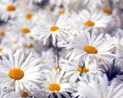 Images Flowers Flowers Hd Wallpapers Page 0 Walldiskpaper