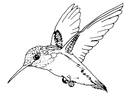bird coloring pages for toddlers robin animal coloring pages red robin bird coloring pages red robin