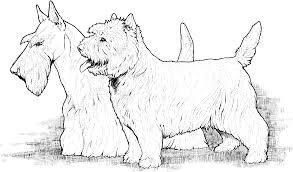 free coloring page coloring corto maltese art nouveau dog