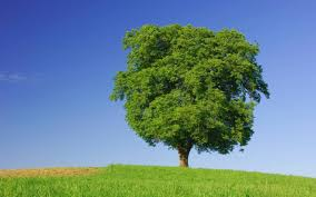 symbolism of a tree the meaning and symbolism of the word tree
