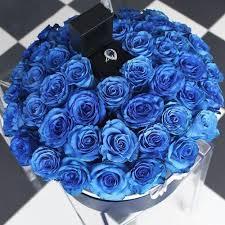 blue rose rings images 343 best blue roses images blue roses beautiful jpg