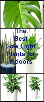 good low light plants terrific office plants green offices plant container inovative