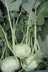 Green Root Vegetable - inland empire csa kohlrabi