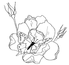 free butterfly coloring pages butterfly on roses