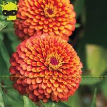 Flower Seeds Online - zinnia flower seeds online shopping the world largest zinnia