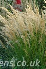 ornamental grasses product categories knoll gardens ornamental