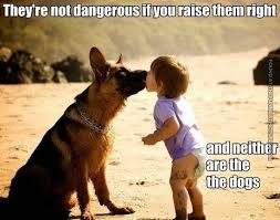 German Shepherd Memes - 12 best german shepherd memes images on pinterest german shepherd