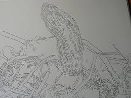 matthew darwin sketches