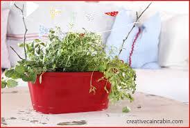 mini kitchen herb garden creative cain cabin