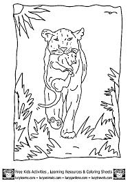 lion coloring sheets lioness cub bycub lion coloring pages
