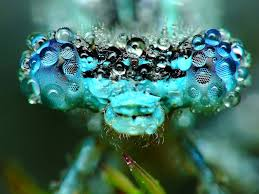 20 startling facts about insects