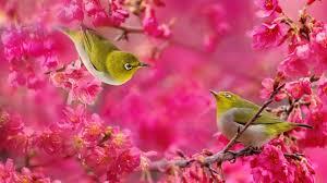Wallpaper With Birds Birds Wallpaper Peeinn Com