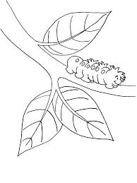 caterpillar coloring book