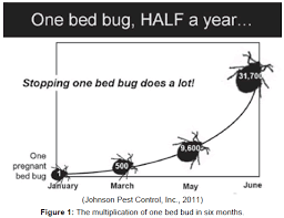 One Bed Bug Bed Bugs Epidemic In The United States Open Access Journals
