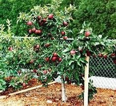 yes you can easily grow fruit trees in michigan michigan