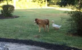 boxer dog kills man worst 20 human foods for your dog u2013 dog show
