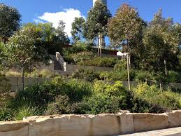 landscaping with australian native plants native gardens of the brand new barangaroo reserve u2013 janna