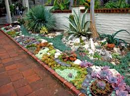 succulent rock garden pictures best idea garden
