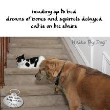 haiku poems about tigers haiku by dog heading up to bed