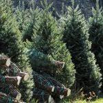 christmas trees for sale near me christmas lights decoration