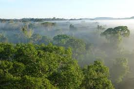 canopy amazon study downplays risk of catastrophic amazon dieback climate central