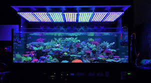 Fluval Sea Marine And Reef Led Strip Lights by Reef Tank Lighting On Tapatalk Trending Discussions About Your
