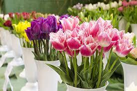 flowers online selling flowers online cardinalcommerce
